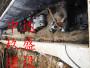 衡水市巖石頂管低價承包高標質量施工隊伍咨詢: