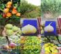 河南新乡哪里才卖杏树哪里卖的便宜