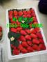 吕梁圣安德瑞斯草莓苗一颗多少钱、