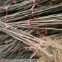 新疆购买加州黑无花果、玛斯义陶芬无花果树苗种植间距多少