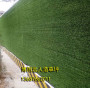 张家川回族自治县可以做围挡人造草坪的厂家(实拍案例:永靖、榆中县、民乐)