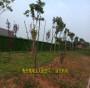 新闻:衢州草坪墙面安装视频(工程实景:西湖:绍兴:象山)