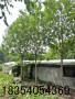 天水18公分柳樹價格適應性強