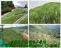 江苏常州高速绿化大型客土液力喷播机