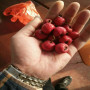 买少量大金星山楂种苗果树苗木处理