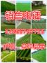 园林绿化草坪种子种类