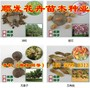 华北连翘种子价格多少??一亩地用几斤种子?