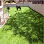 每日价格:城围挡人造草坪|城批发价格