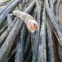 2021常州高压电缆线回收煤矿电缆回收随叫随到