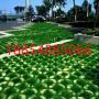 2021歡迎##濟寧市塑料植草格##廠家價格