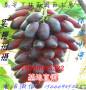 阿坝甜蜜蓝宝石葡萄苗品种介绍