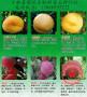 晚熟桃树苗管理技术