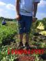 新闻;鄄城3年蓝莓苗种植技术蓝莓苗[种植@基地]