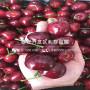 俄8大樱桃树苗价格、2020年俄8大樱桃树苗价格