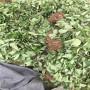 云浮紅夏草莓苗出售價格