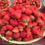 黄石初恋草莓苗多少钱