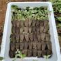 牡丹江四季塞娃草莓苗上车价格