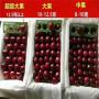 u2-7櫻桃苗批發價格
