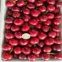 红蜜樱桃苗价格多少