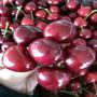 吉塞拉6號大櫻桃樹苗市場價格