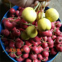 黄果山楂苗广东广州种植经验分享苗木选择
