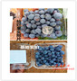 新闻:宁波市三年蓝莓苗 报价【股份@有限公司】