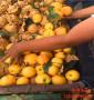 吕梁市哪里有卖珍珠枣油桃苗种植技术汇总