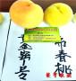 3公分桃樹苗烏海市農戶多年推薦品種