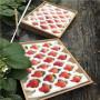 ;湖北明寶草莓苗怎么賣的