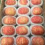 甘肃矮化的福丽苹果苗每天新报价