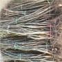 河北定植两年的中油18桃树苗批发多少钱