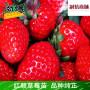 丹东信浓红苹果树苗新闻主产区长期供应