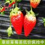 贺州冬桃树苗新闻主产区种苗