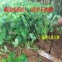 眉山1公分红将 苹果树苗(新闻)较好的品种