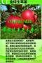 湖北鄂州》哪里有黄金冬桃苗/大棚种植?