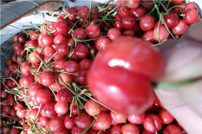河南新乡优质红蛇果苗《新闻》哪里便宜