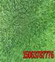 邊坡綠化一平米需要多少草籽廣東梅州-高羊茅如何養護