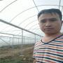 广东深圳温室大棚新闻)玻璃阳光板大棚多少钱