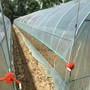 快訊*駐馬店蔬菜溫室大棚市場價格