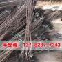 今日报价:安阳供应7公分柿树苗-明辉苗木