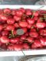 大樱桃新品种黄玉樱桃苗种植基地品种有保证