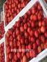 大櫻桃品種苗砂蜜豆櫻桃苗苗木銷售售苗有保證
