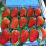 寧夏紅顏草莓苗、紅顏草莓苗采購價格