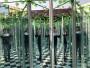 今日報價:黃岡鏡子迷宮出租制作廠家