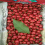 一年u2-7櫻桃樹苗廠家價格、天津市